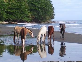 Brigittes Pferde Ranch in Cahuita, Talamanca, Limon / Alle Regionen