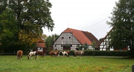 Dream Horse Ranch in Bad Essen / Heithöfen / Niedersachsen