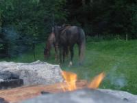 Reiturlaub auf der Slidingstop-Ranch in Uetliburg SG, Ostschweiz - Wanderreiten neu entdecken!