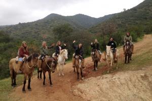 Gut ausgebildete, gepflegte,sichere Criollo Pferde