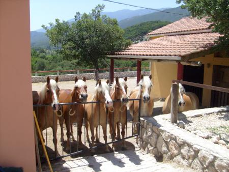 Bavarian Ridingstable in Sami/ Koulourata, Insel Kefalonia / Ionische Inseln