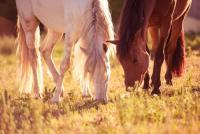 Reiturlaub in der unberührten Natur Andalusiens, Finca la Mimbre mit Herden/Koppelhaltung in Vejer
