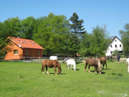 Ferien-/ Urlaubsbetrieb, Bauernhof, Ponyhof, Kinderferienbetrieb in Hürtgenwald