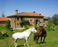 Wanderreiten / Westernreiten auf zuverlässigen 'Criollos' in Bivignano / Toskana
