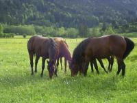 Urlaub mit dem eigenen Pferd in Tirol/Österreich
