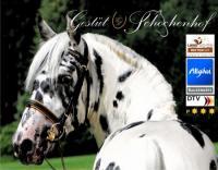 Club Deportivo HorsesGredos - Reiturlaub in La Carrera, Castilla, Spanien!