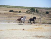 Ferien für Reiter, solche, die es werden wollen und für Nichtreiter auf spanischem Gutshof in Mula!
