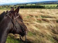 Western reiten in den Belgischen Ardennen für fortgeschrittene Reiter - Kurz-Reiturlaub in Belgien