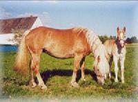 Freizeitbeschäftigung mit dem Partner Pferd auf Silvio´s Ranch in Sachsen.