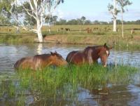 Susan River Homestead Adventure Resort  - Reiturlaub im schönen Queensland in Australien!