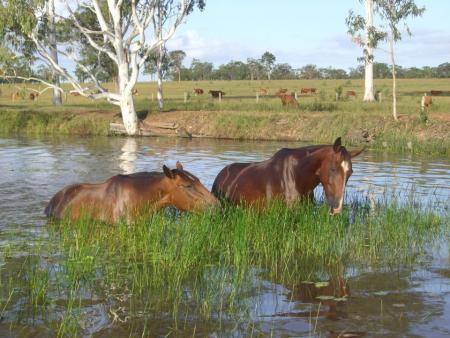 Homestead Adventure Resort in Hervey Bay  / Maryborough / Queensland