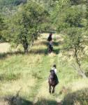 Reiturlaub in den Karpaten, Rumänien - auf Arabo-Friesen die Natur erkunden, erleben und hören