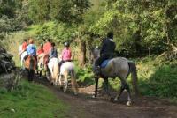 Azoren: Reiturlaub und Gespannfahren auf der Insel Terceira in Angra do Heroísmo