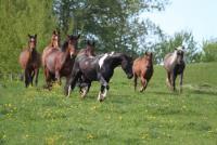 Reiterferien für Jung und Alt auf der Morgen Ranch in Bayern in der Hallertau