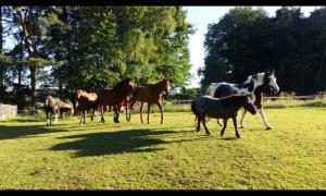 Sommer auf der Morgen Ranch