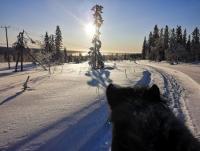 Natur aktiv mit Islandpferden in Paljakka, Finnland - Reiturlaub in Finnland!