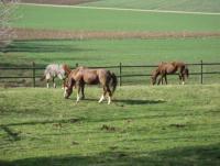 Pensionsstall la Pastorale: Reiturlaub mit dem Pferd in der Schweiz im Kanton Waadt