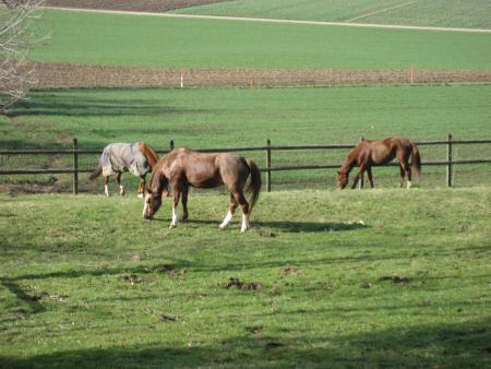 la Pastorale in Burtigny / Genfersee-Schweizer Mittelland