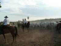 Reiturlaub in Paraguay auf der Estancia Rodeo Tayi Zebu-Rinderfarm, abenteuerlich und einzigartig