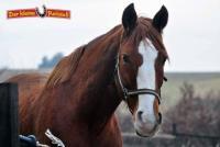 3...2...1...auf die Pferde...fertig...los! Reiterferien im 'Kleinen Reitstall' in Wolgast, Usedom