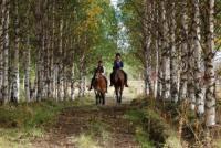 Reiten in Lappland... auf dem Pferderücken durch Europas Alaska