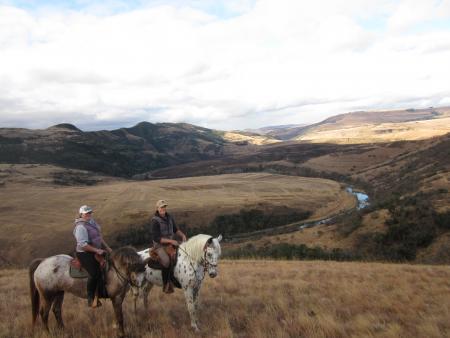 ZuluWaters Working with Horses in Estcourt/Mooi River / Kwa Zulu/Natal-Durban