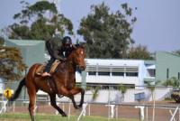 African Hoofbeatz - Reitpraktika in Simbabwe für Pferdefreunde, um Natural Horsemanship zu erlernen