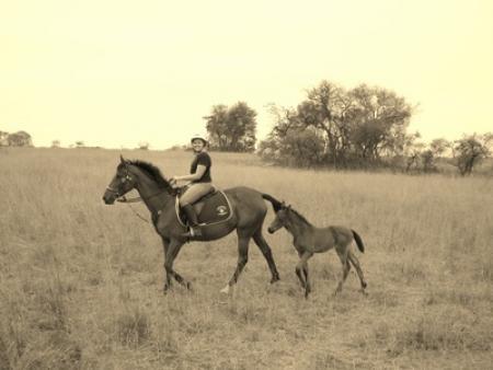 African Hoofbeatz in Bulawayo / Alle Regionen