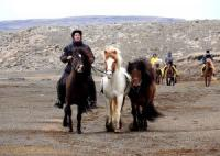 Nupshestar - Reiturlaub im Herzen von Island, 3-Tagestouren, Schaf Roundup uvm.