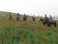 Iran Nomad Horseback Riding Kalout: Reiten & Kamelreiten im Iran