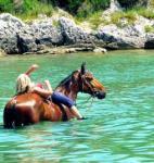 Entdecken Sie die Schönheit und den Zauber Istriens zu Pferd! Schwimmen mit Pferden!