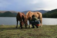 Wanderreiten in den Weiten der Mongolei für Anfänger bis Fortgeschrittene