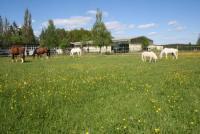 Urlaub und Reiterferien in der Kärner-Villa der Reit- und Freizeitanlage Wiesau im Oberpfälzer Wald