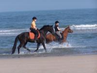 Reiturlaub mit dem eigenen Pferd auf Het Platte Putje am Rande von Groede in Zeeland