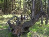 Erlebnis- und Reitercamp Timber Ridge Trails in British Columbia - Reiturlaub in Kanada!