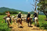 Abenteuerurlaub & Reitvergnügen auf der Hacienda Sassenberg - Reiturlaub in Costa Rica!