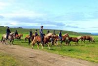 Reiturlaub an Ostfrieslands Nordsee - komfort. Fewos - faszinierende Pferde