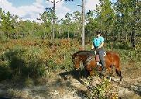 Reiten in Florida - dies ist einfach der beste Platz  um Florida auf dem Pferderücken zu erleben