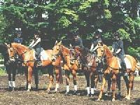 Reiterferien und mehr für Kinder auf einem altmärkischen Bauernhof