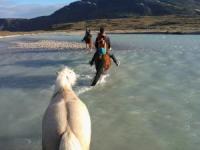 Reiten in Grönland