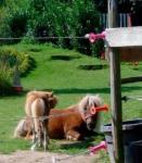 Reiterferien in familiärer Atmosphäre auf dem Ponyhof in Linnich, NRW, Wanderreitstation