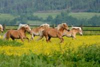 Wanderreiten in den Gebirgsalmen des Tian Shan mit CBT Karakol - Nord-West-Kirgisien