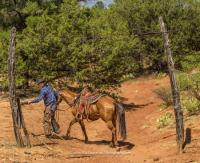 M Diamond Ranch-Ranchurlaub auf einer Working Ranch nahe Sedona, Arizona-2 Stunden vom Grand Canyon!