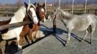 Nora's Ranch in Mazedonien...