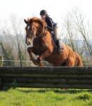 Crossogue Equestrian Centre