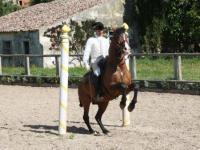 Santo André Lusitanos - Klassischer Reit- und Dressur-Unterricht in der Nähe von Lissabon, Portugal