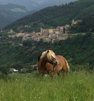 Ferien-/ Urlaubsbetrieb, Reiterhof in Serra San Quirico (An)