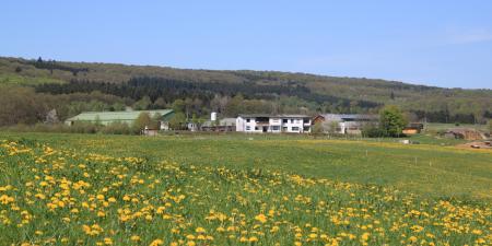 Reitanlage Lindenhof in Wadern/Nuhweiler / Saarland