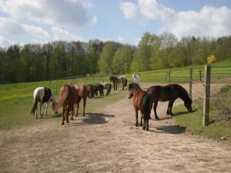 Happy Horse Ranch in Rauhenebrach / Bayern