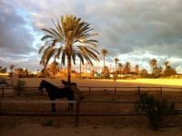 Auf Berber- und Araberpferden die Insel Djerba entdecken! Reiturlaub in Tunesien!